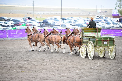 6 horse hitch driving competition