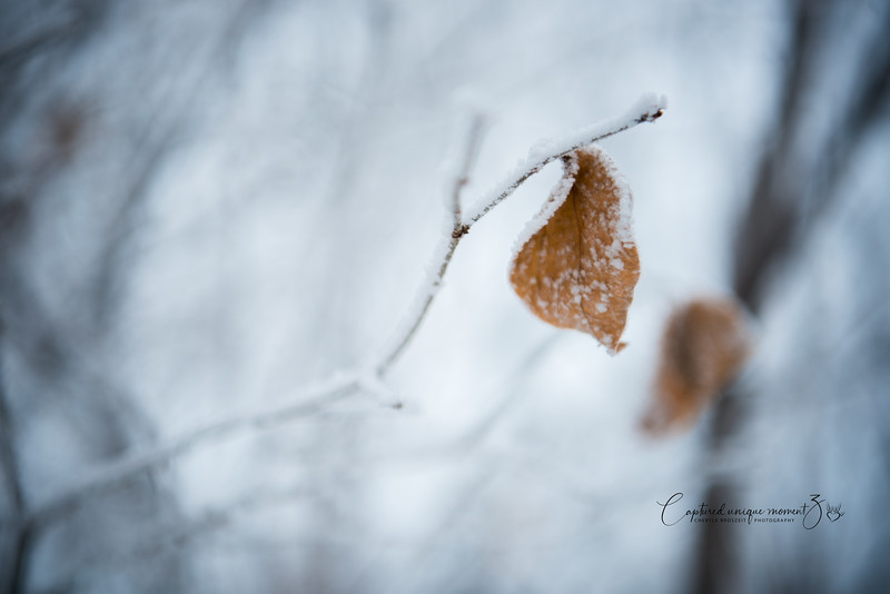 181212 Frosty 0035.jpg