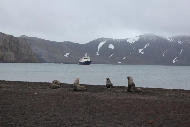 Antarctica 080.JPG