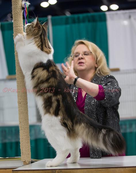 CatShow2014092_1.jpg