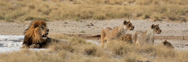 Namibia E4A4961.jpg