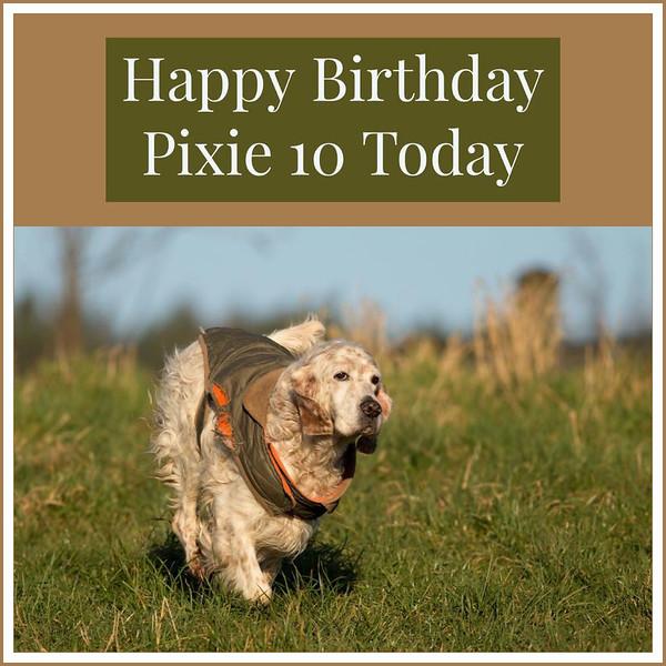 Pixies-birthday.jpeg