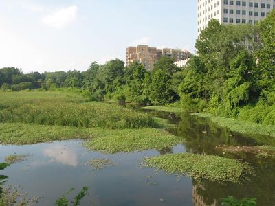 Balston Beaver Pond 7