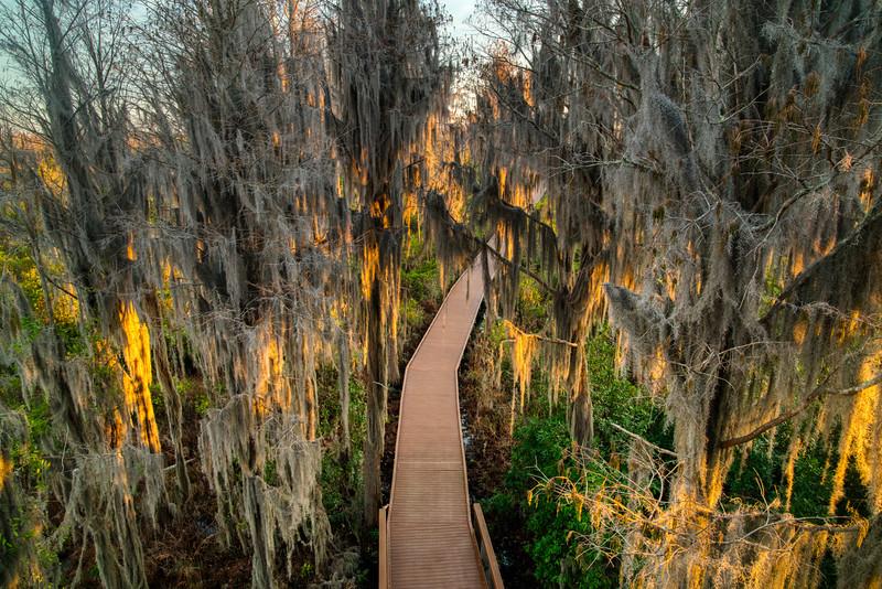 Okeefenokee Swamp 2020-11.jpg
