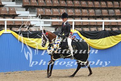Class 19 Lrg Show Pony