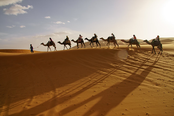 Camels!!!