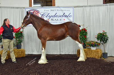 2013 National Clydesdale Sale