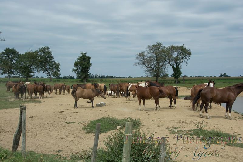 2014_Horses_Woodstown_12.jpg
