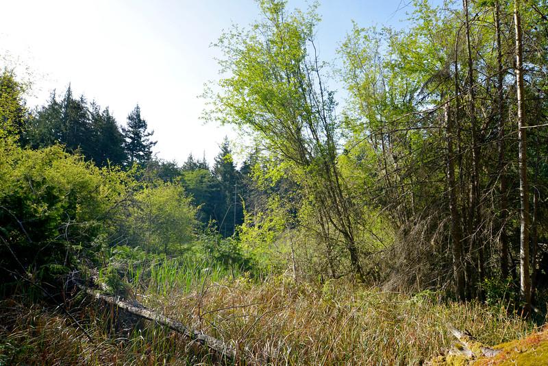 wetlands2_12.JPG