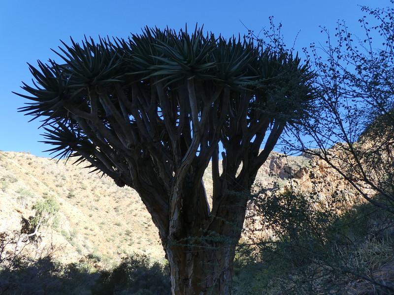 Namibia Lumix  (126).JPG