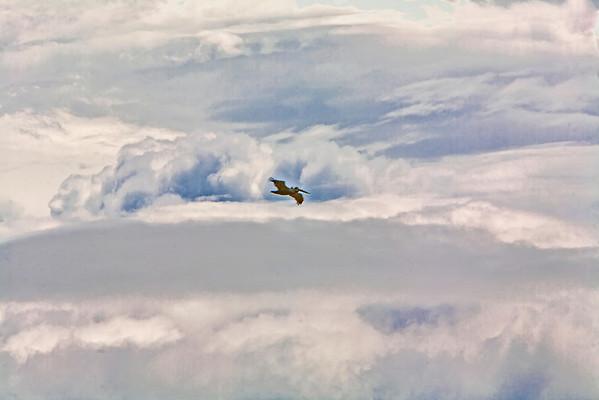 Kite Boarding Hatteras North Carolina