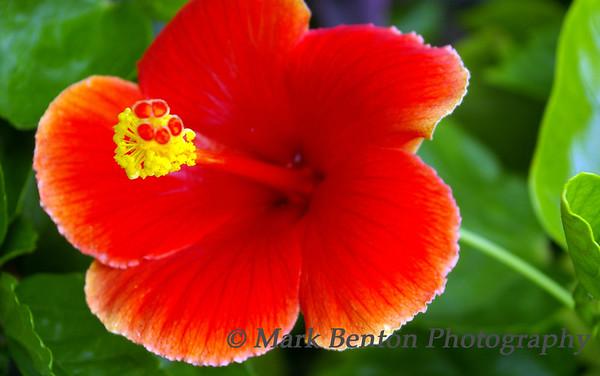 Cancun Blooms