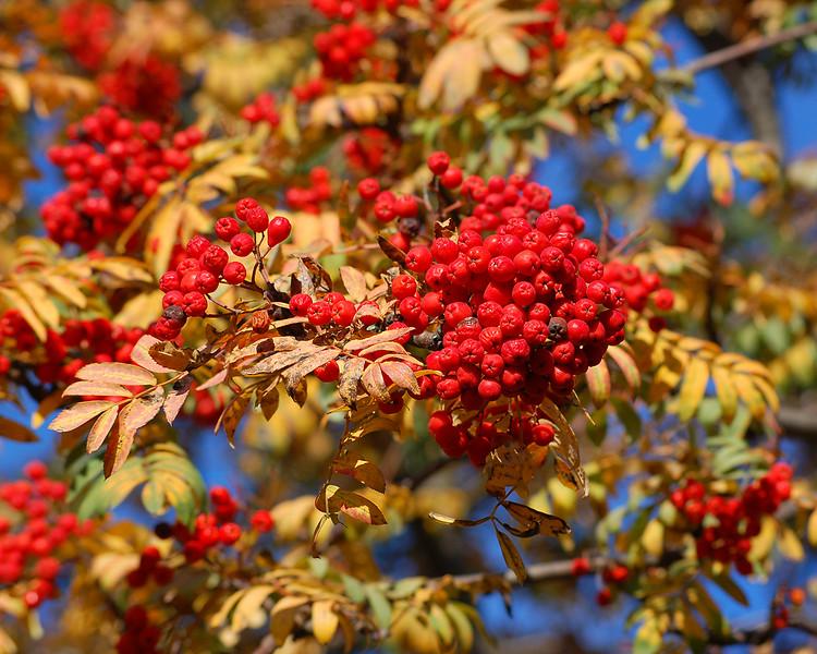 Fresh Berries in St. James's Park