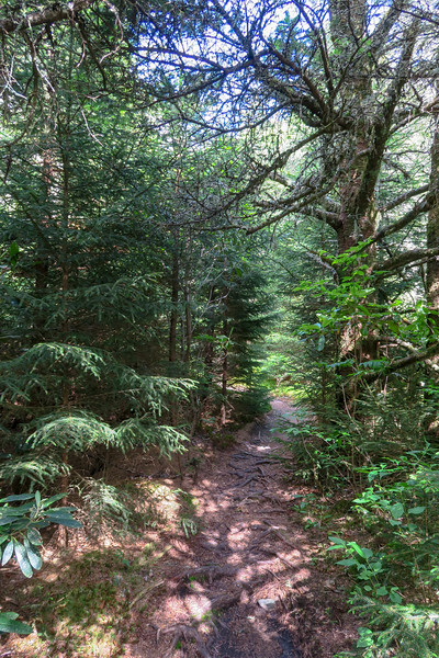 Green Mountain/Mountains-to-Sea Trail Junction -- 5,750'
