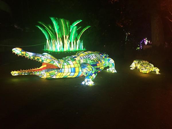 Vivid at Taronga Zoo 2018