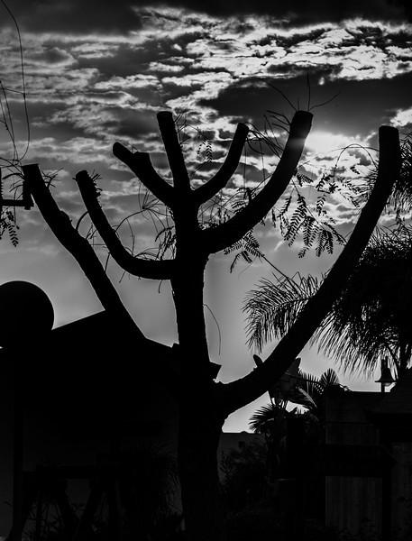 Menorah Tree.jpg