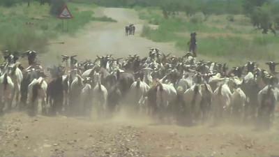 2008 - Africa