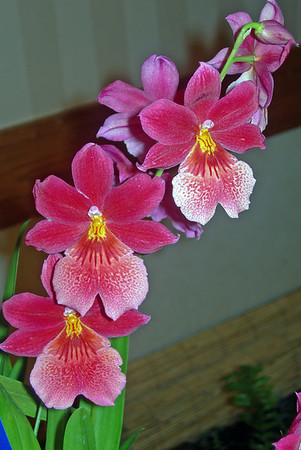 2007 Orchid exhibit
