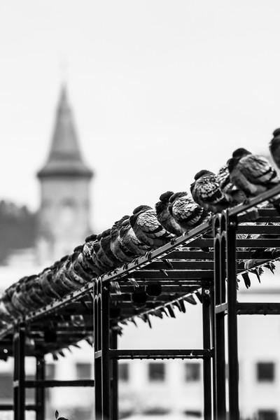 Bergen photowalk