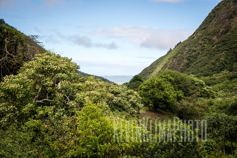 Maui2016-152.jpg
