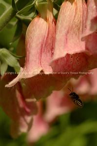 016-bee_flower-nlg-12jun08-0017