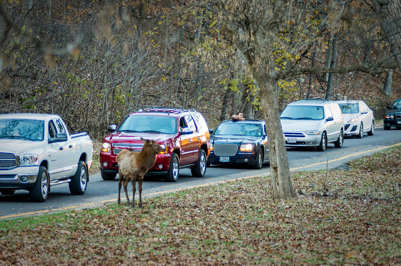 Lone Elk Park Animals
