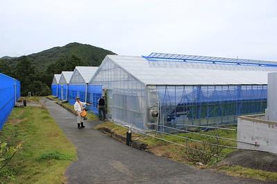 Japan Nov 2011