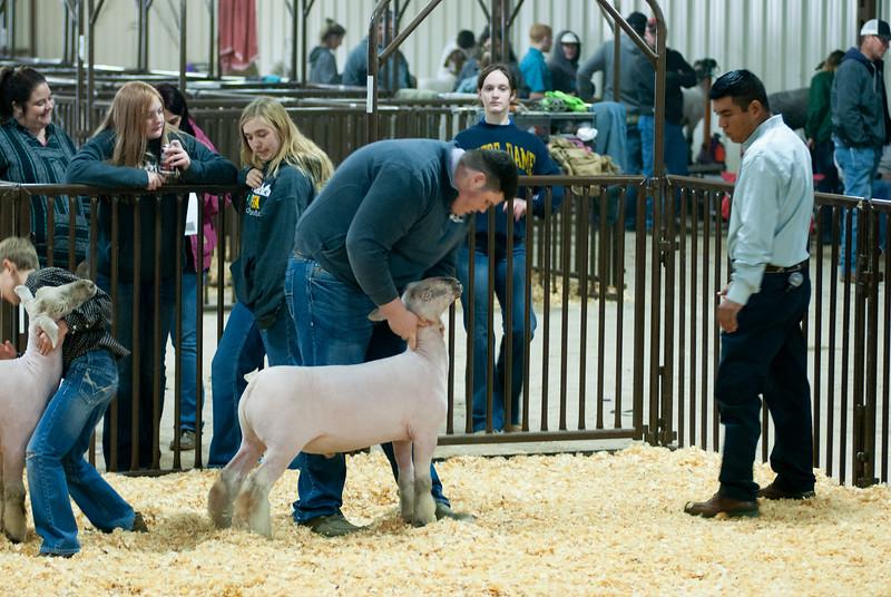 kay_county_showdown_sheep_20191207-56.jpg