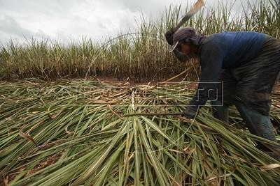 Ethanol & Sugar Cane
