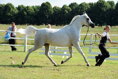 Mares 7-10 yrs