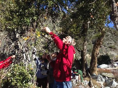 20141206 Mistletoe Hike