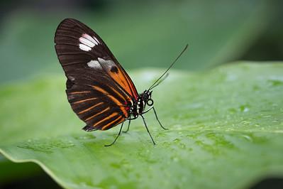 Butterfly Pavilion 2012