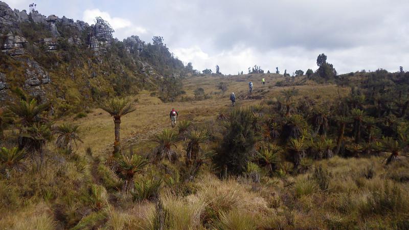 Papua savanna 1