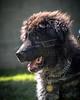 RescuedogsCanon_EOS_5D_Mark_III-2805