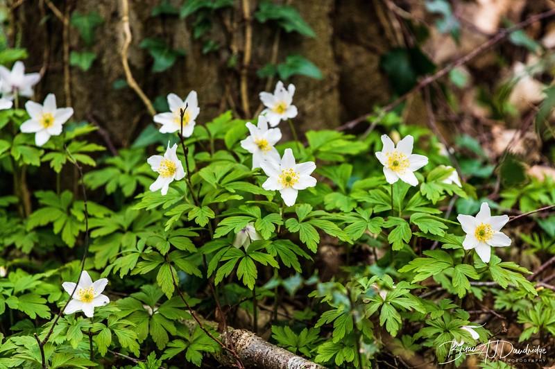 Bedelands Nature Reserve-0832.jpg
