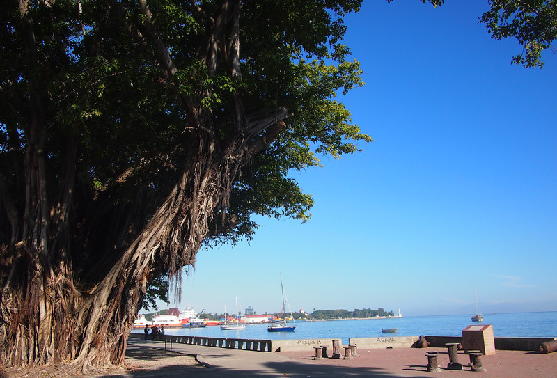 P5258822-waterfront-tree.JPG