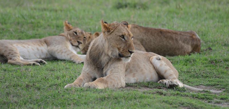 East Africa Safari 32.jpg