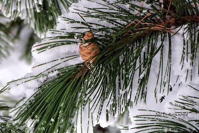 Winter/Christmas