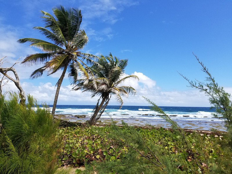 Barbados (23).jpg