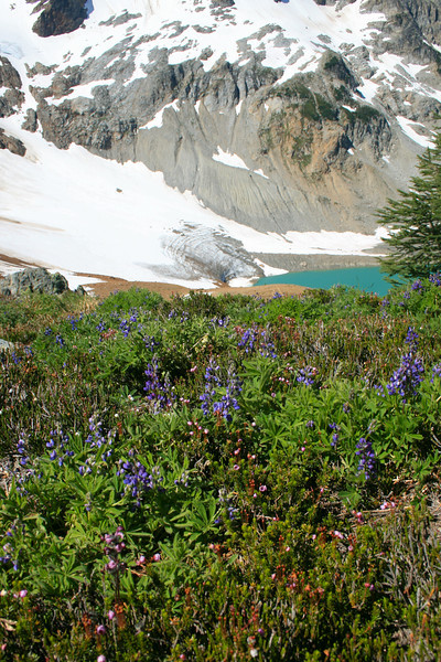 Lupine and Chiwawa Glacier.