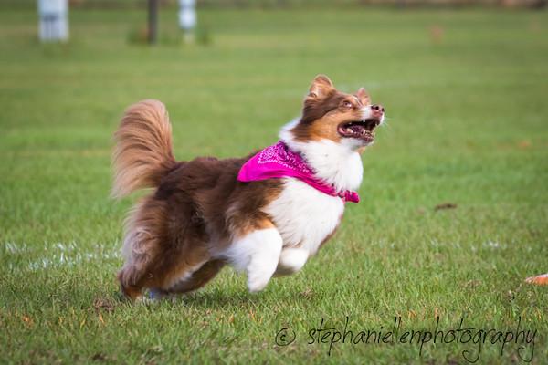 _MG_2509Up_dog_International_2016_StephaniellenPhotography.jpg