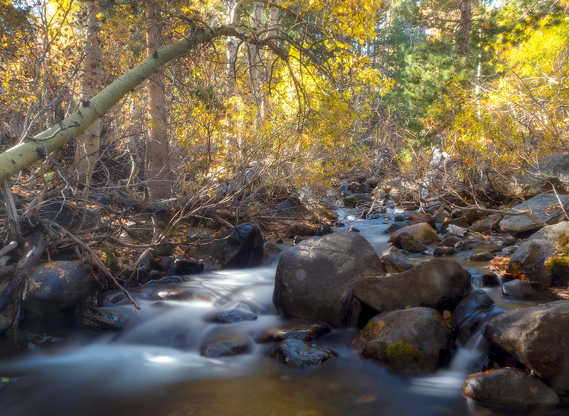 virginia creek morning.jpg