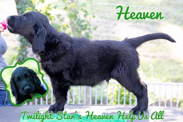 "Twilight Star's Heaven Help Us All ""Heaven"""