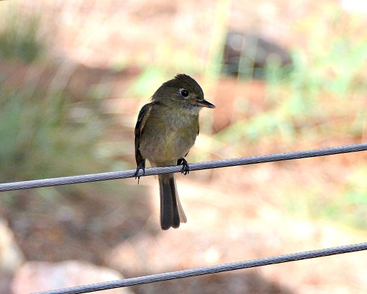 Flycatch1.jpg