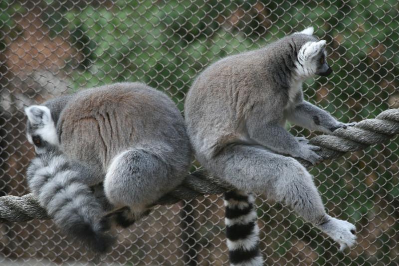 Atl Zoo_IMG_1695