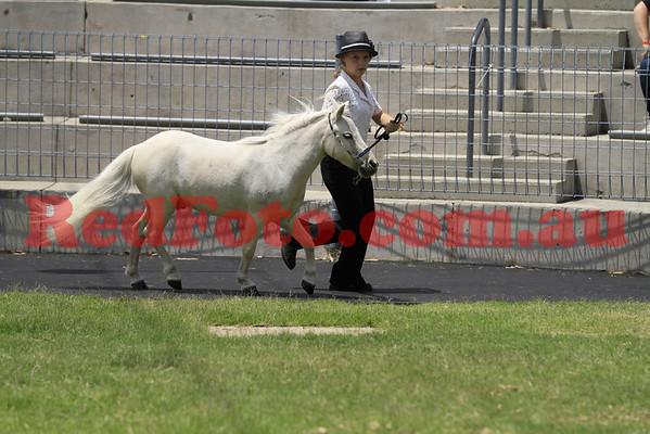 2011 11 10 Equitana Minitana