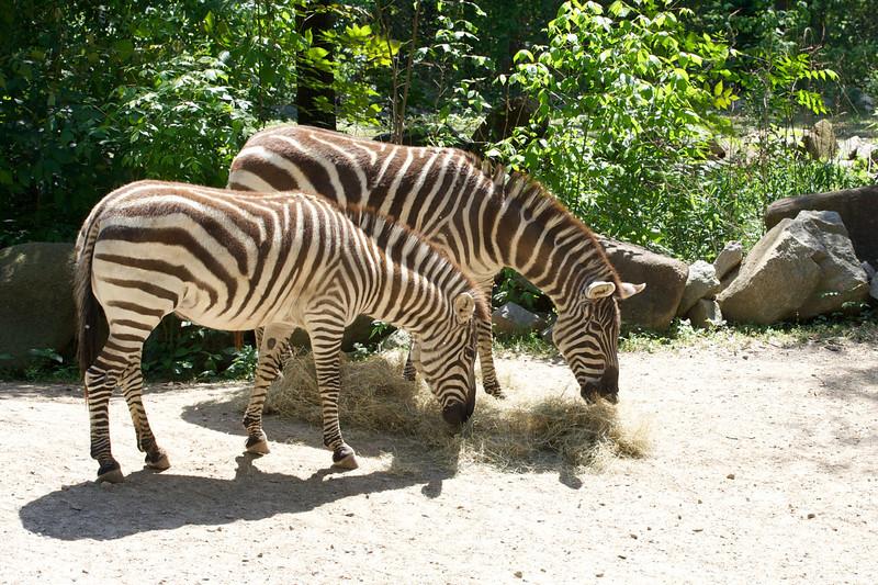Zoo_Trip_47.jpg