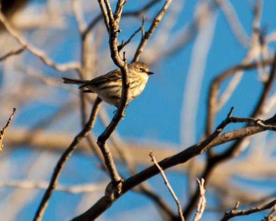 Southlake - BJNC - North Walnut Grove Trail  - 1/22/2014