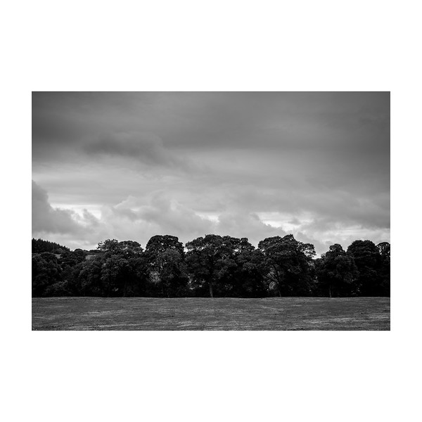 264_Trees_10x10.jpg