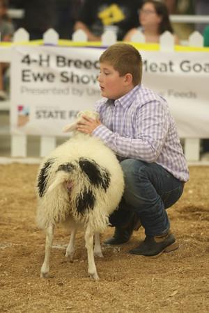 4-H Breeding Sheep